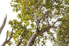 Δέντρο κορμών με έναν κλάδο και ένα φύλλο Στοκ Φωτογραφία