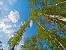 δέντρο κορωνών στοκ φωτογραφίες