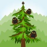 Δέντρο κουκουβαγιών στο δάσος ελεύθερη απεικόνιση δικαιώματος
