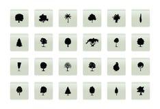 δέντρο κουμπιών Στοκ φωτογραφία με δικαίωμα ελεύθερης χρήσης