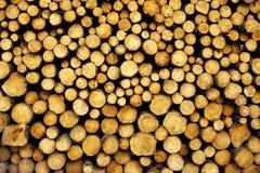 δέντρο κούτσουρων Στοκ εικόνες με δικαίωμα ελεύθερης χρήσης