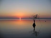 δέντρο κυπαρισσιών Στοκ φωτογραφίες με δικαίωμα ελεύθερης χρήσης