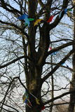 Δέντρο κόμματος Στοκ Εικόνες