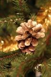 δέντρο κώνων Στοκ φωτογραφίες με δικαίωμα ελεύθερης χρήσης