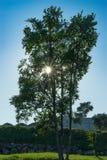 Δέντρο λαμβάνοντας υπόψη έναν μπλε ουρανό στοκ εικόνα με δικαίωμα ελεύθερης χρήσης