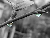 Δέντρο λεμονιών, παφλασμός χρώματος Στοκ Εικόνα