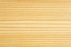 δέντρο λεπτομέρειας απο&k στοκ φωτογραφίες με δικαίωμα ελεύθερης χρήσης
