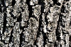 δέντρο λεπτομέρειας Στοκ Φωτογραφία