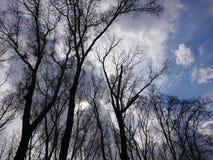 Δέντρο λευκών υψηλό στον ουρανό στοκ εικόνες