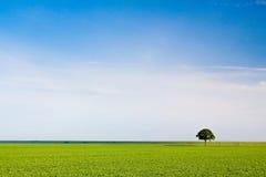 δέντρο λιβαδιών επαρχίας Στοκ Φωτογραφίες