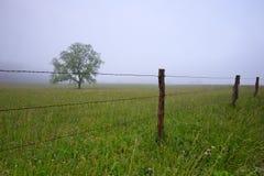 δέντρο λιβαδιών ομίχλης Στοκ εικόνα με δικαίωμα ελεύθερης χρήσης