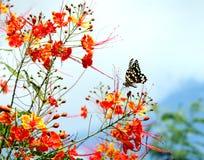 δέντρο λουλουδιών αξόνων Στοκ εικόνα με δικαίωμα ελεύθερης χρήσης