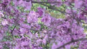 Δέντρο λουλουδιών απόθεμα βίντεο