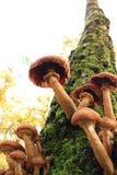δέντρο μανιταριών φθινοπώρ&omicro Στοκ εικόνα με δικαίωμα ελεύθερης χρήσης