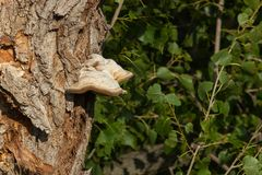δέντρο μανιταριών Στοκ εικόνες με δικαίωμα ελεύθερης χρήσης