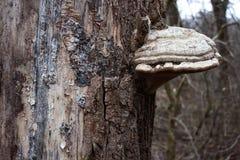 δέντρο μανιταριών Στοκ φωτογραφία με δικαίωμα ελεύθερης χρήσης