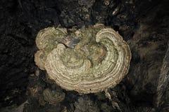 δέντρο μανιταριών Στοκ Εικόνα