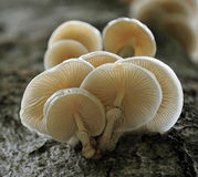 δέντρο μανιταριών Στοκ φωτογραφίες με δικαίωμα ελεύθερης χρήσης