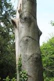 δέντρο ματιών Στοκ Φωτογραφίες