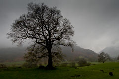 Δέντρο, μεγάλο Langdale στοκ φωτογραφίες με δικαίωμα ελεύθερης χρήσης