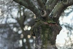 Δέντρο με ένα αστείο πρόσωπο σκέψης Πρόωρη καιρική έννοια άνοιξη Στοκ φωτογραφίες με δικαίωμα ελεύθερης χρήσης