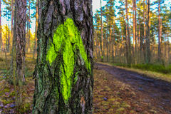 Δέντρο με ένα πράσινο βέλος σε ένα ξύλο στοκ εικόνα με δικαίωμα ελεύθερης χρήσης