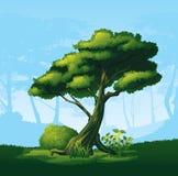 Δέντρο με μια κυρτή κορώνα απεικόνιση αποθεμάτων