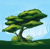 Δέντρο με μια κυρτή κορώνα ελεύθερη απεικόνιση δικαιώματος