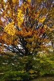 Δέντρο με πολλούς κλάδους Στοκ Φωτογραφία