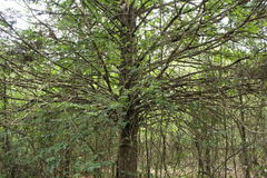 Δέντρο με πολλούς κλάδους στοκ φωτογραφία με δικαίωμα ελεύθερης χρήσης