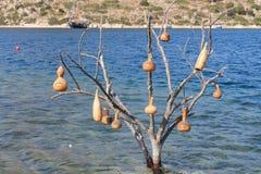 Δέντρο με τα βάζα στο νερό στοκ εικόνα