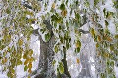 Δέντρο με τα ζωηρόχρωμα φύλλα στοκ εικόνες με δικαίωμα ελεύθερης χρήσης