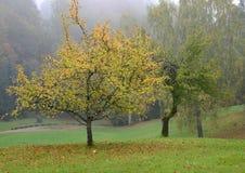 Δέντρο με τα κίτρινα φύλλα. Σκηνή φθινοπώρου. Στοκ Εικόνες