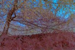 Δέντρο με τα κίτρινα φύλλα Στοκ Φωτογραφίες