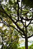 Δέντρο με τα παπούτσια Στοκ φωτογραφία με δικαίωμα ελεύθερης χρήσης