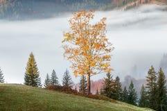 Δέντρο με τα πορτοκαλιά φύλλα Στοκ φωτογραφία με δικαίωμα ελεύθερης χρήσης
