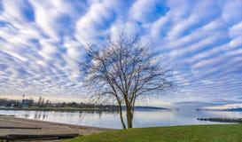 Δέντρο με τα πλούσια σύννεφα στοκ φωτογραφία με δικαίωμα ελεύθερης χρήσης