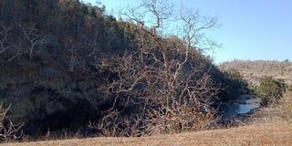 Δέντρο με τα τοπία φύσης ποταμών και βουνών, Lakhnadon Ινδία, εικόνα που λαμβάνεται το Φεβρουάριο του 2018, υπόβαθρο τοπίων φύσης Στοκ φωτογραφία με δικαίωμα ελεύθερης χρήσης