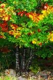 Δέντρο με τα φθινοπωρινά χρώματα Στοκ Εικόνες