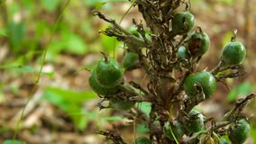 Δέντρο με τα φρούτα Στοκ Φωτογραφία