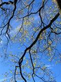Δέντρο με τα φύλλα πεσμένος στο πάρκο Στοκ Εικόνες