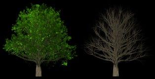 Δέντρο με τα φύλλα και χωρίς φύλλα που απομονώνονται στο μαύρο υπόβαθρο απεικόνιση αποθεμάτων