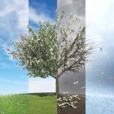 Δέντρο με τα φύλλα χρημάτων - sesaon τέσσερα Στοκ φωτογραφία με δικαίωμα ελεύθερης χρήσης