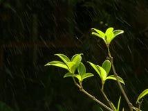 Δέντρο με τη βροχή Στοκ Εικόνες