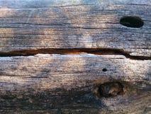 Δέντρο με τις τρύπες Στοκ Φωτογραφία