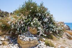 Δέντρο με τις χρωματισμένες κορδέλλες και τις πέτρες επιθυμίας κοντά στην παραλία αγάπης Βράχος Aphrodite ` s - τόπος γεννήσεως A Στοκ Φωτογραφία