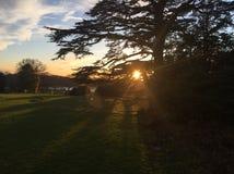 Δέντρο με τον ήλιο Στοκ εικόνα με δικαίωμα ελεύθερης χρήσης