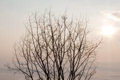 Δέντρο με τον ήλιο Στοκ Φωτογραφία