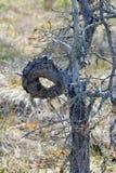 Δέντρο με τον καμμμένο μίσχο Στοκ εικόνα με δικαίωμα ελεύθερης χρήσης