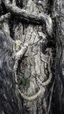 Δέντρο με τον κισσό Στοκ εικόνες με δικαίωμα ελεύθερης χρήσης